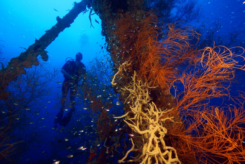 Coron Shipwreck Reefs - Photo from expatads.com
