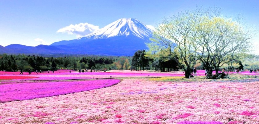 Mount Fuji - Feature