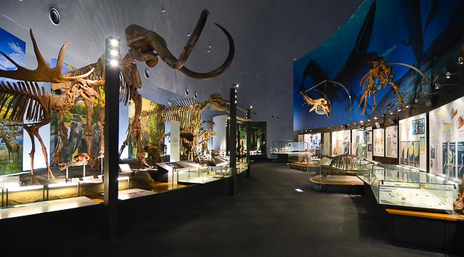 001 JAPAN Fukui Prefectural Dinosaur Museum 3