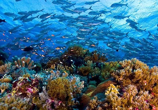 Linapacan Palawan corals