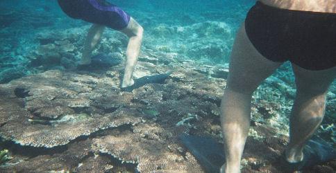 Damaging Corals in El Nido