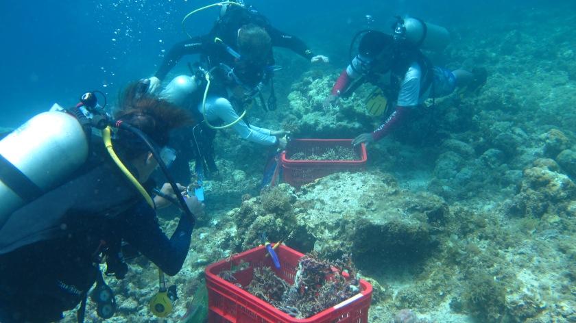 Damaged Corals - journeytothephilippines