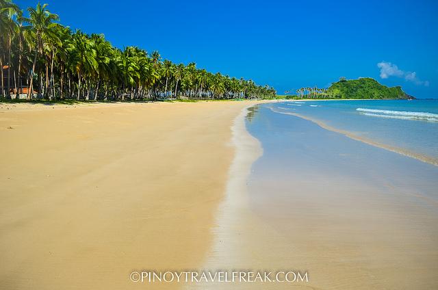 Long line of coconut trees along Nacpan shore.