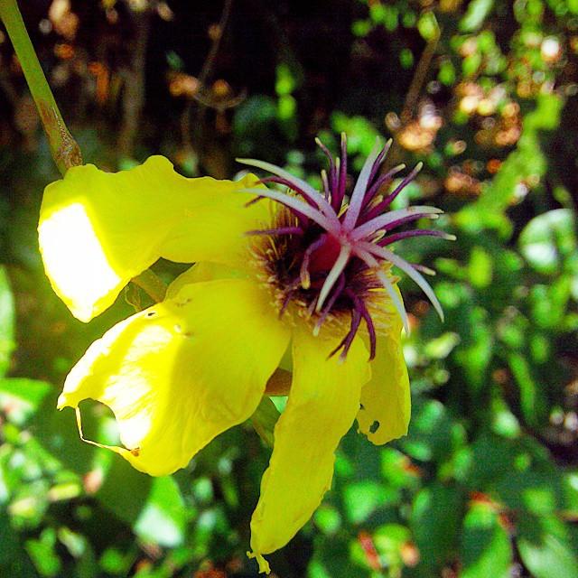 Mt Bloomfield Flora